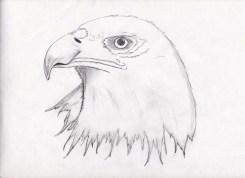 pencil eagle